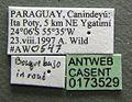 Neivamyrmex pilosus casent0173529 label 1.jpg