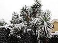 Nevicata 26-2-18 a.jpg
