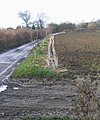 Newly planted hedge near Abbess Roding - geograph.org.uk - 108729.jpg