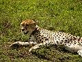 Ngorongoro Crater (84) (14168707603).jpg