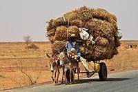 Niger, Liboré, donkey cart.jpg