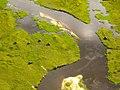 Nijlpaarden in de Okovango Delta (6558975165).jpg