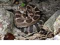 Northwest Wildlife 08 (6872904609) (2).jpg