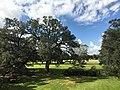 Oak Alley Plantation Views 11.jpg