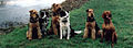 Obedience Dogs. Surrey UK.jpg