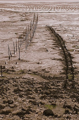 Putcher fishing - The remains of an old putcher rank, where baskets were placed to allow fish to swim in at high tide and for the fishermen to retrieve them at low tide; at Whitson near Newport, Wales
