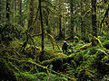 Olympic Rainforest Hiker.jpg