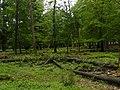 Ondergroei in Nationaal Park Veluwezoom.JPG