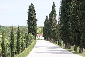 Oprtalj - Image: Oprtalj, tree lined road