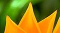 Orange leaves macro (2623069482).jpg
