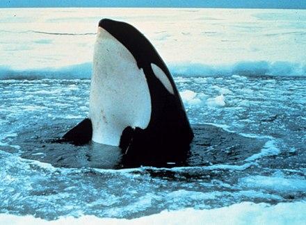 Kohlenstoff datiert Meereslebewesen