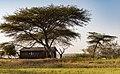 Oromia IMG 5397 Ethiopia (38978670514).jpg