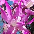 Orquídeas de mamá.jpg