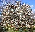 Ostereierbaum, mit 10.000 Eiern geschmückt IMG 9910WI.jpg