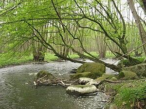 Peene - Image: Ostpeene 30 04 2008 263