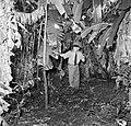 Overste Boogh tussen de bananenbomen op de voormalige Jodensavanna aan de Surina, Bestanddeelnr 252-6934.jpg