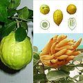 Owoce Cytron.jpg