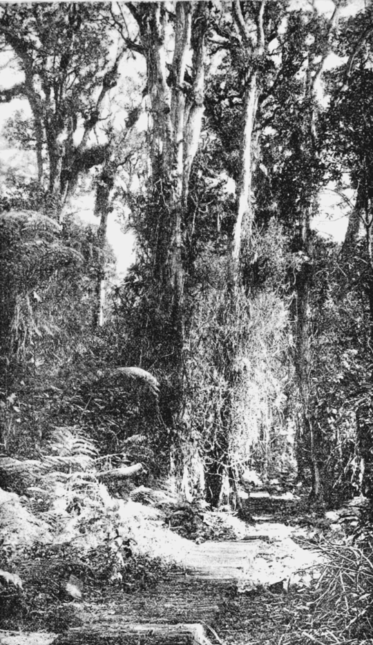 PSM V66 D203 Interior of lehua forest.png