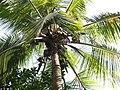 Palm (240578665).jpg