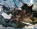 Palmiarnia Zielonogórska - środek9.jpg