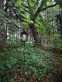 Památné stromoví Bransoudov 01.jpg