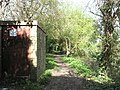 Path above the Chichester canal - geograph.org.uk - 758618.jpg