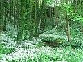 Path of the Gil Burn - geograph.org.uk - 547595.jpg