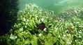 """Paysage subaquatique Subaquatic landscape rivière """"Les Baillons"""" à Enquin-sur-Baillons F Lamiot 28.jpg"""