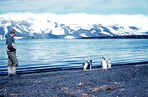 Penguins on Deception Island, Antarctica