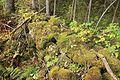 Per Post sitt steingjerde ved potetåkeren han hadde nederst i Grythengen, dengang under Grythe, seinere grensegjerde.jpg