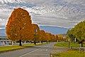 Perfect Fall Trees - Penticton - panoramio.jpg