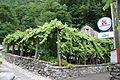 Pergola vignata Giumaglio - Osteria dal Nito 1.JPEG