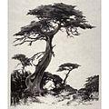 Perham Wilhelm Nahl, Lone Cypress.jpg