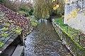 Perthes-en-Gatinais - Rivière l'Ecole - 2012-11-14 - IMG 8245.jpg