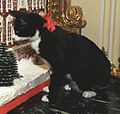 Photograph of Socks the Cat Standing Next to the Gingerbread Replica of the White House- 12-05-1993 (6461501333) (cropped).jpg
