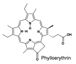 Phylloerythrin.png