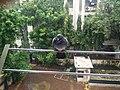 Pigeon in the rain.jpg