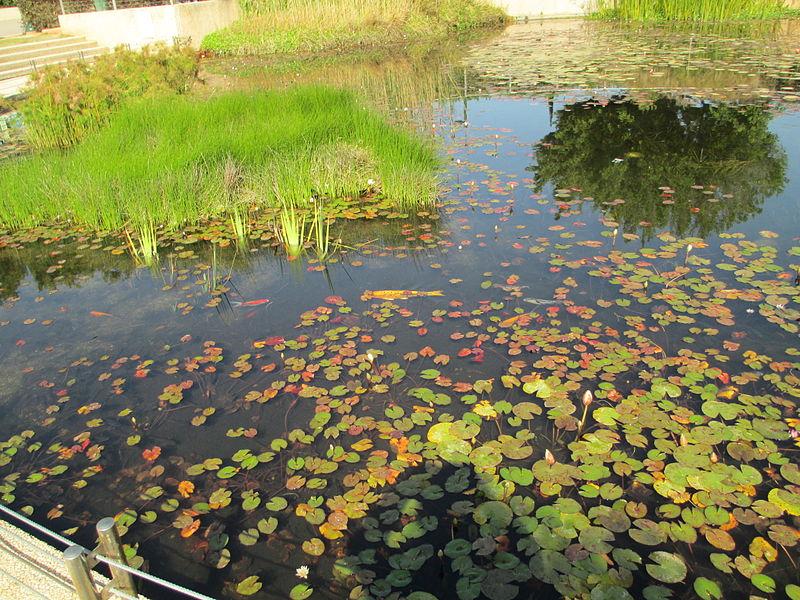 בריכה אקולוגית בפארק כפר סבא