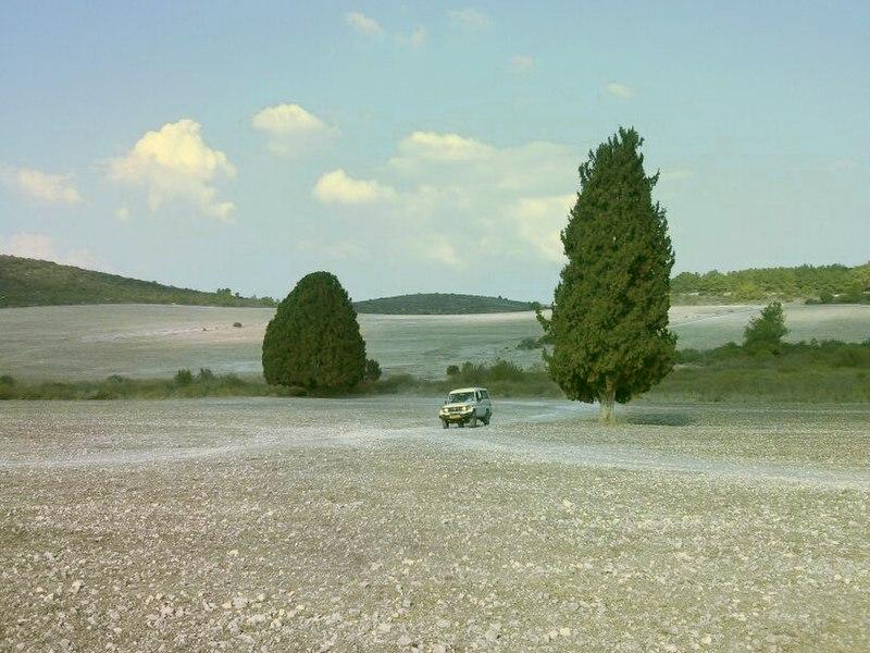 עץ ברוש הגדול בארץ