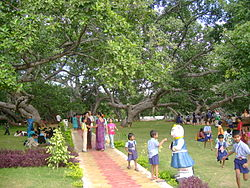 The biggest banayan tree (Pillalamarri), symbol of the district