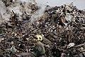 Plasco rescue operations and debris removal 48.jpg