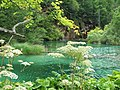 Plitvice Lakes National Park (4).jpg
