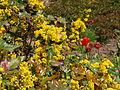 Poltava Botanical garden (98).jpg