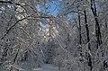 Porphyrlehrpfad im Winter - Rochlitzer Berg - Geotop - Sachsen.jpg