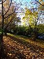 Praha, Ruzyně, podzimní listí.JPG