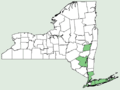 Prenanthes serpentaria NY-dist-map.png