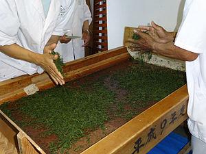 Green tea - Hand-rolling green tea after steaming