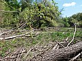 Psilskyi Landscape Reserve (05.05.19) 06.jpg