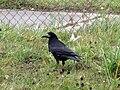 Pták na Staré osadě.jpg