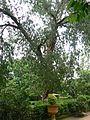 Punk tree (1093785221).jpg